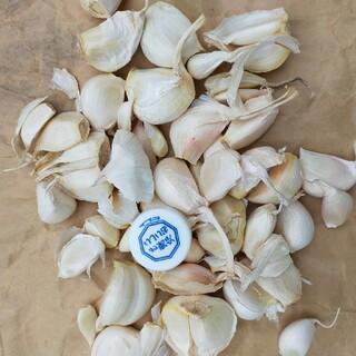 ニンニクの種、約200g+おまけ(野菜)