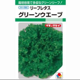 グリーンウェーブ フリルレタス*種子 30粒(野菜)
