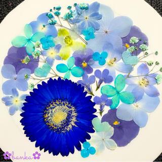 ✿押し花素材✿直径約6.5cmガーベラ入りブルー系アソート【25枚】
