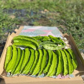 無農薬野菜 自然野菜セット 四角豆 インゲン ニンニク ししとう