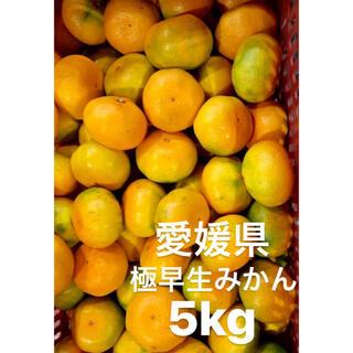 愛媛県産 極早生みかん 5kg