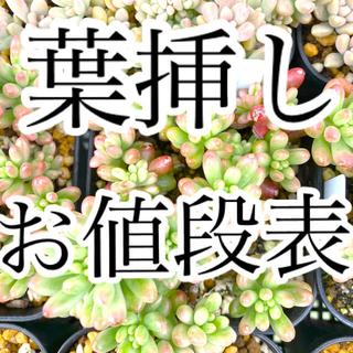 葉挿し値段表 コメントにて在庫、葉の状態確認願います^ ^(その他)
