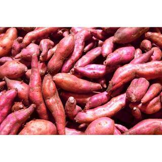 【 #さつまいも 新芋 2キロ ミニ芋】【味付小料理に!】 #金時芋 #薩摩芋(野菜)