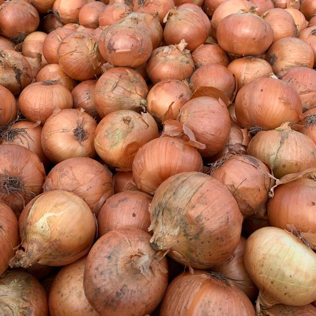 北海道産 玉ねぎ 正品 M〜L  混み玉 10kg 食品/飲料/酒の食品(野菜)の商品写真