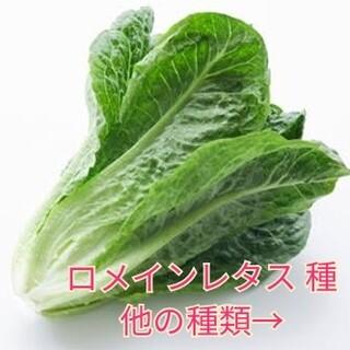野菜種☆ロメインレタス☆変更→カラフル人参 春菊 わさび菜 チンゲン菜 ほうれん(野菜)