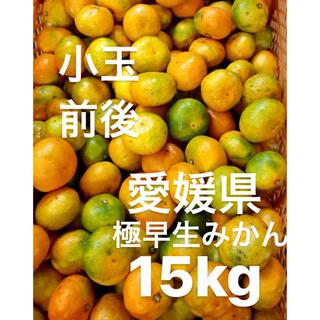 愛媛県産 極早生みかん 15kg