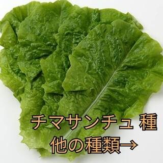 野菜種☆チマサンチュ☆変更→ほうれん草 カラフル人参 チンゲン菜 つるむらさき(野菜)