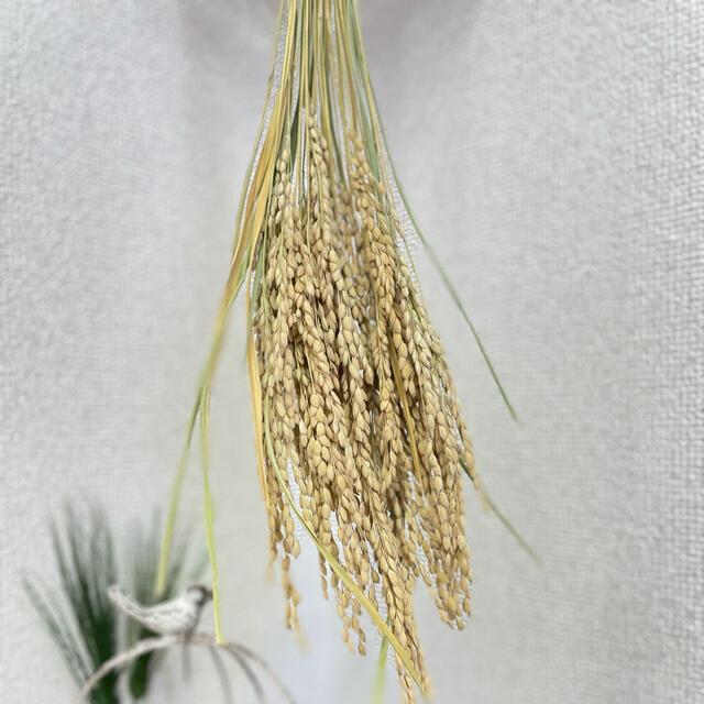 稲穂 ハンドメイドのフラワー/ガーデン(その他)の商品写真