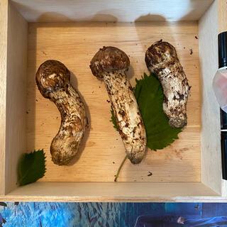 つぼみあり 長野県産 松茸 200g