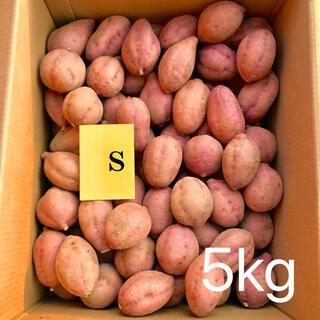 【絶品】種子島産  安納芋S 5kg