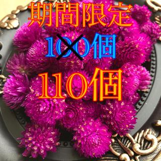 【期間限定】千日紅 ドライフラワー 紫 110個(ドライフラワー)