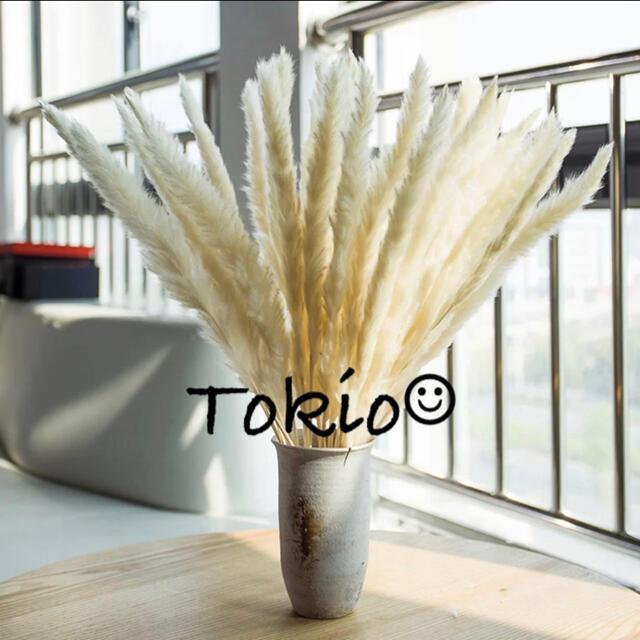 期間限定セール中★パンパスグラス テールリード ホワイト インテリア 10 ハンドメイドのフラワー/ガーデン(ドライフラワー)の商品写真