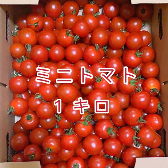 ミニトマト 1kg  食品/飲料/酒の食品(野菜)の商品写真