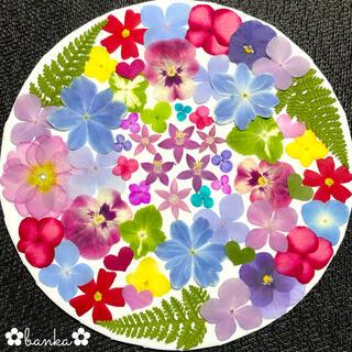 ✿押し花素材✿鮮やか彩りアソート【40枚】