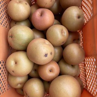 栃木県産 あかづき梨5kg ご家庭用 サービス