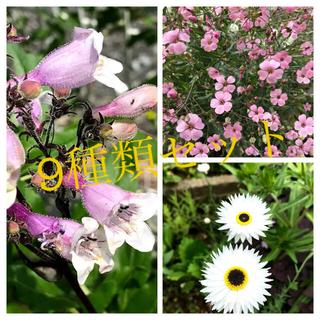 花の種 9種類セット【A-3-1】(その他)