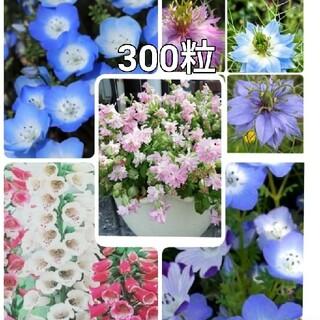 🌺花の種シレネピーチブロッサム ジキタリス ネモフィラ2種 ニゲラ(プランター)