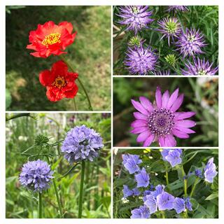 花の種 9種類セット(その他)
