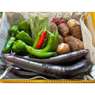 季節のお野菜詰め合わせ 無農薬 コンパクトボックス