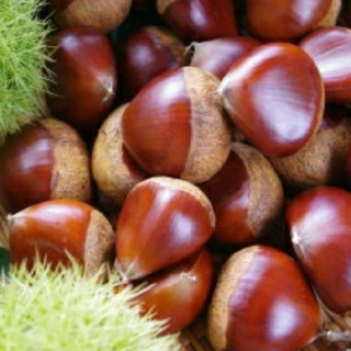 生栗🌰 約850g 無農薬 三重県産(野菜)