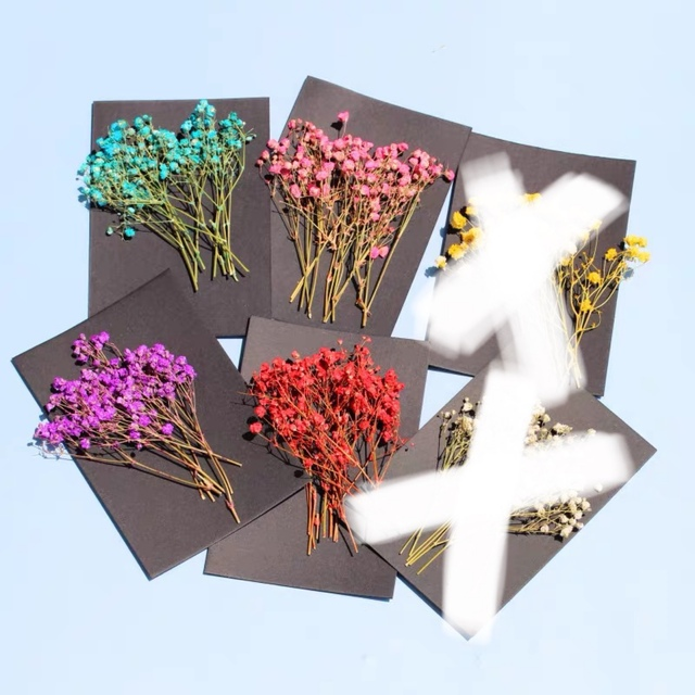 【6点お得セット】 ドライフラワー かすみ草 カスミソウ ハンドメイド 素材 ハンドメイドのフラワー/ガーデン(ドライフラワー)の商品写真