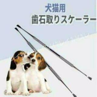 ❇激安価格❇ペット用 犬猫用 スケーラー ②(犬)