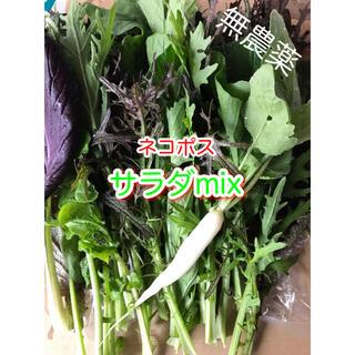 サラダmix ネコポス 野菜(野菜)