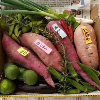 無農薬秋野菜セット、1日1セットのみ(野菜)