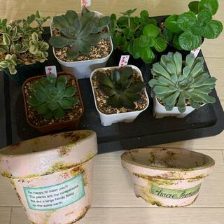 多肉植物☆リメイク鉢セット(プランター)