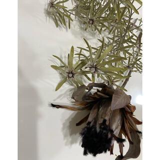 専用!大量ネイティブフラワーセットニオベやパンパスグラス等ドライフラワー❁花材(ドライフラワー)