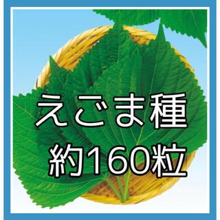 えごま種約160粒(プランター)