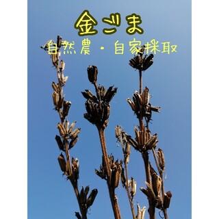 【自然農・自家採種】金ゴマの種 まっすぐのびる 場所取らず(野菜)