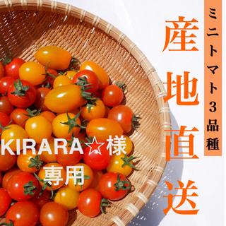 カラートマト 2kg 【クール】黄色トマト オレンジトマト採れたて☘️(野菜)