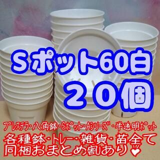 Sポット60 白 20個 2号 丸型 スリット鉢 プレステラ 多肉植物 プラ鉢(プランター)