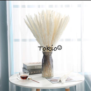 期間限定セール中★パンパスグラス テールリード ホワイト インテリア 10(ドライフラワー)