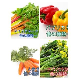 野菜種☆パプリカ スイスチャード 人参 アスパラ菜☆変更→ビーツ 丸オクラ(野菜)