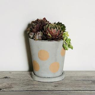 プランター 植木鉢 水玉 ブラウン お皿付き(プランター)