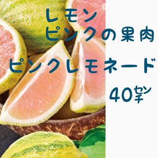 ピンクの果肉レモン ピンクレモネード【a】 苗木 ★接ぎ木 ★40㌢(プランター)