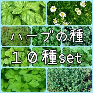【ハーブの種】10種 セット 種子(その他)