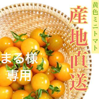 イエローミミ3kg(野菜)