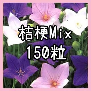 【桔梗の種】150粒 種子 キキョウ(その他)