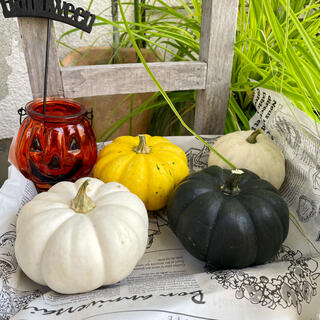 白かぼちゃ2個 黄色かぼちゃ1個 黒かぼちゃ1個★ハロウィン(野菜)