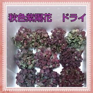 秋色紫陽花ドライ♠北海道産♠ボルドー ライム ブルー♠アジサイあじさい♠小ぶり(ドライフラワー)