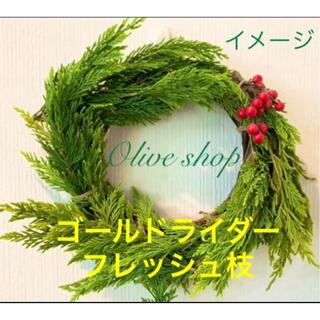 リース/スワッグ/生花 花材 装飾素材などに⭐️ゴールドライダー枝 37cm4本(その他)