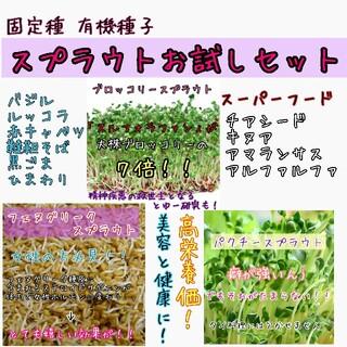 スプラウト 固定種 有機種子 野菜の種 水耕栽培 ハーブの種 種 種子(野菜)