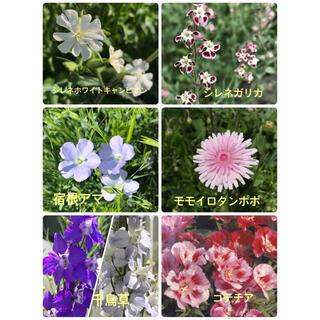 花の種【6種セット 各50粒】合計300粒(その他)