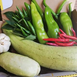 白キュリ 食用ホワイトヘチマ 糸瓜   青赤唐辛子+鷹の爪組み合わせ野菜(野菜)