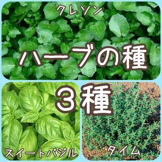 【ハーブの種】3種 150粒 種子(その他)
