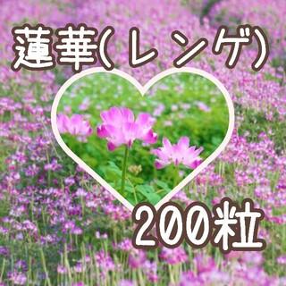 【蓮華草の種】200粒 蓮華 レンゲ れんげ (その他)