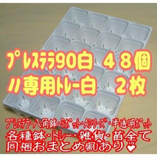 【スリット鉢】プレステラ90白48個+専用システムトレー白2枚 プラ鉢 多肉植物(プランター)